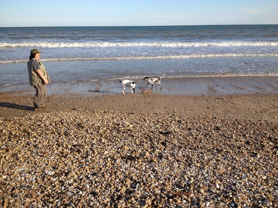Birders Haven: Beach