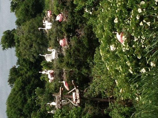 Birders Haven : Rookery