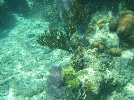 Hobbies Hideaway: another reef shot