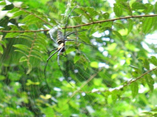 Ton Tuey Floating Raft Houses: big spider