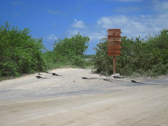 Iguana crossing in front of hotel