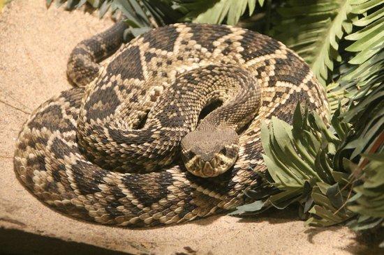 Staten Island Zoo: Rattlesnake