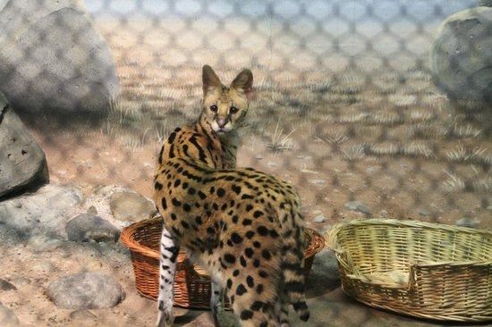 Staten Island Zoo: Civet