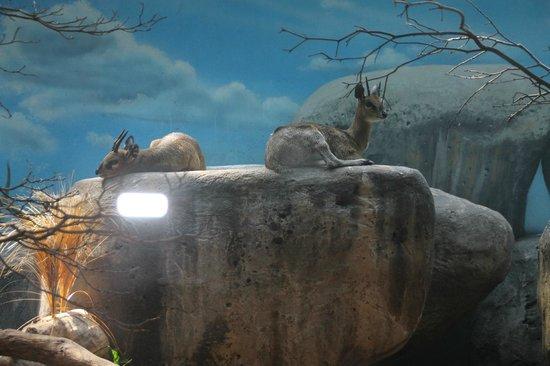 Staten Island Zoo: Sitka deer