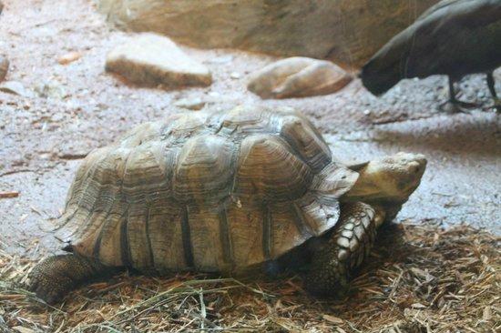Staten Island Zoo: Tortouise