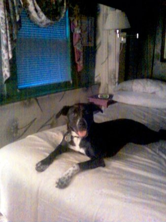 Lazy Dog Inn: Rosie loved coming with us and staying in our room