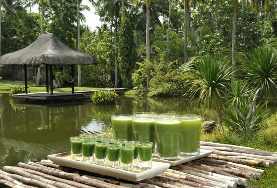 The Farm at San Benito : Wheatgrass & Green Juice