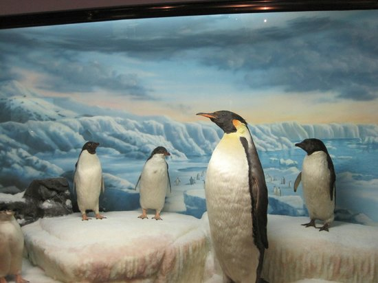 International Wildlife Museum : Beautiful Scene of Penguins in the Arctic