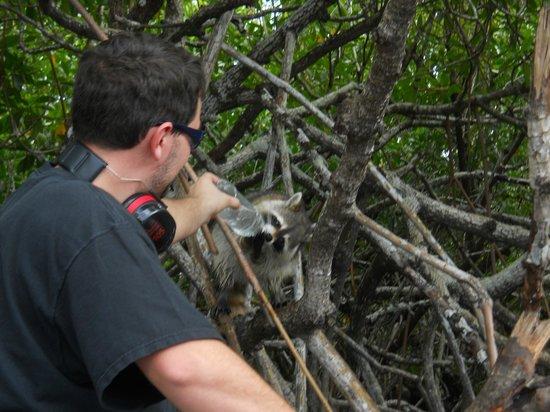 Air Boat USA: raccoon drinking water