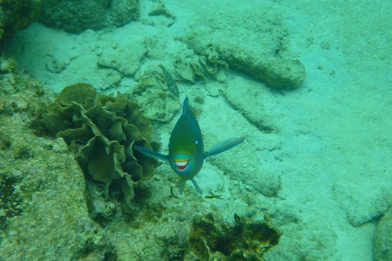 Infinity Bay Spa and Beach Resort: Smilin' parrot fish