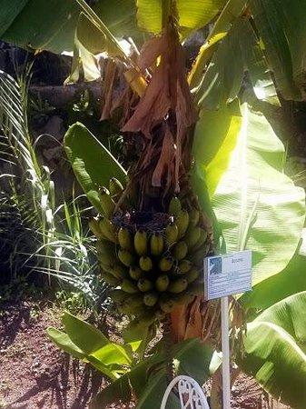 Jardines del Lago: Nest in Banana Bunch @ Jardines
