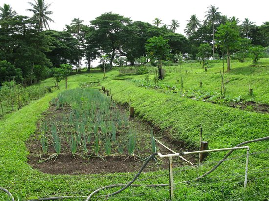 Nakia Resort & Dive : Part of the large organic garden