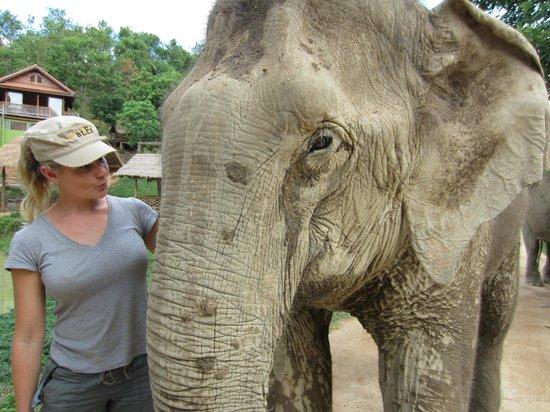 Boon Lott's Elephant Sanctuary : The Beautiful Pang Dow :)