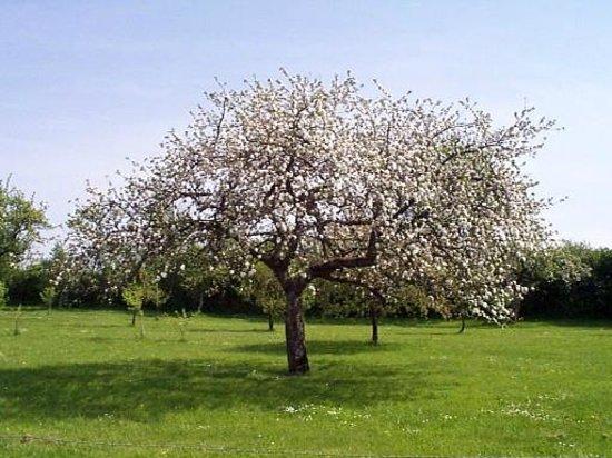 Chambres d'hotes de Sainte-Anne : pommes pour fabrication du cidre breton