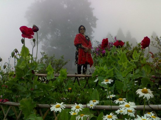 Jorepokhari Tourist Lodge: Garden of the Tourist Lodge
