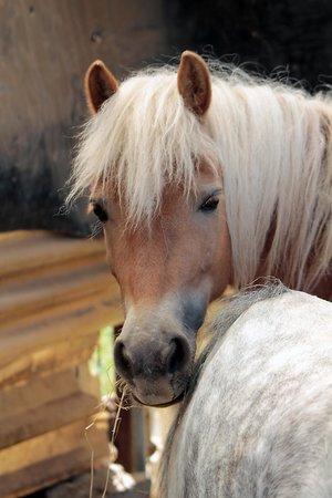 Agriturismo Il Cigno : cavallino