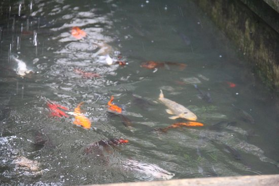 The Grand Palace Hotel Malang: the fish pond