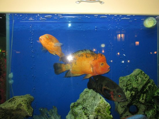 China Town Restaurant: the fishes they have at china town