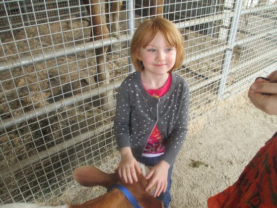 Hershberger Farm & Bakery: Having Fun