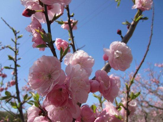 Hiraoka Park: 美しい