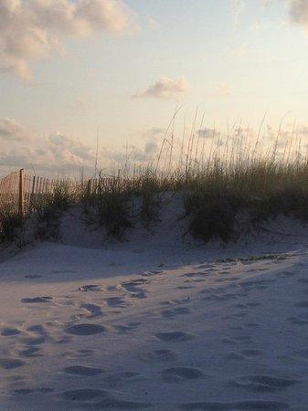 Camp Gulf: Sand Dune