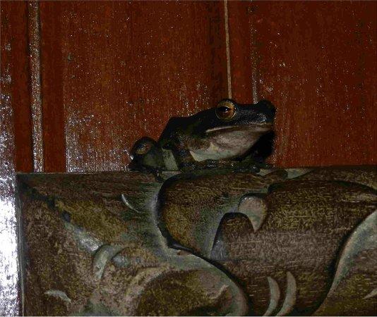 Hotel Tjampuhan & Spa: nos amis les bêtes