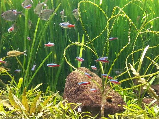 Muséum-Aquarium de Nancy : Simply beautiful, aren't they?