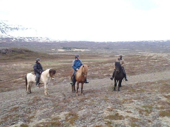 Odin Tours: riding
