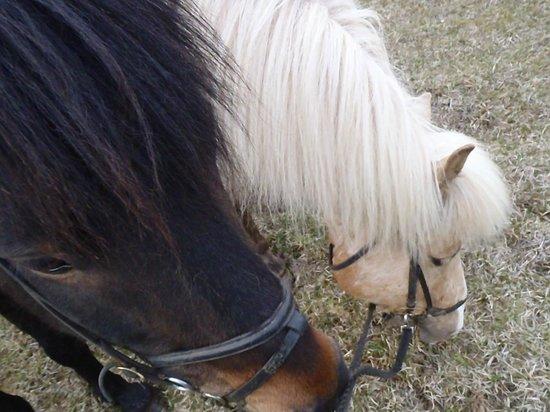 Odin Tours: horses