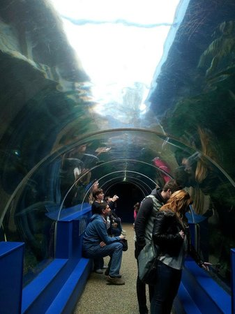 Oceanarium: The tunnel above the sea life.