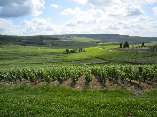 Issy-les-Moulineaux, Francia: Vineyards at Hautvillers-the birthplace of Champagne