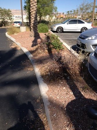 Hampton Inn & Suites Las Vegas-Red Rock/Summerlin: Outside the front door.