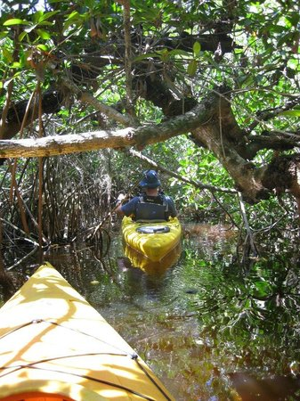 Everglades Rentals & Eco Adventures : Magic of the Mangroves Kayak Tour