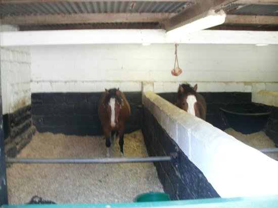 National Coal Mining Museum for England : Eric and Ernie welsh ponies