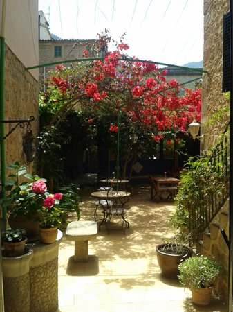 Casa Bougainvillea: the courtyard