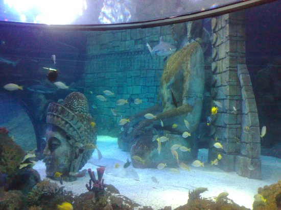 Vasca squali - Picture of Lido di Jesolo Sea Life Aquarium ...