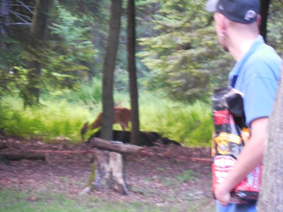 Campers Paradise: Deer in our backyard.