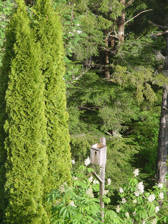 Tall Trees Bed and Breakfast: Tall Tree Ravine