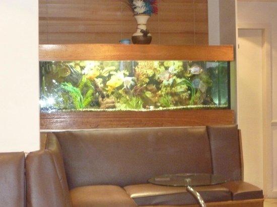 Gazis Indian Restaurant: Fish Tank Inside Gazi'z