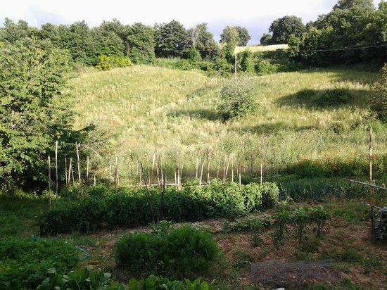 Agriturismo Norianino: La natura nei dintorni