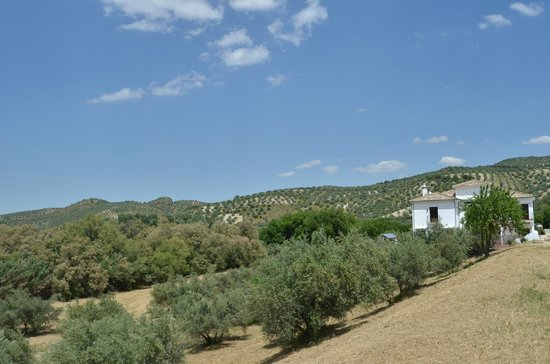 Casa Olea and the surrounding countryside