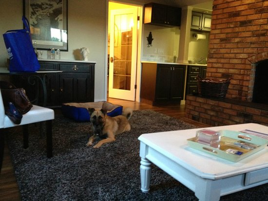 A Touch of English Bed & Breakfast: Taffy enjoying the cozy living room