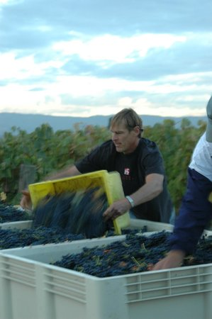 TH Estate Wines: Terry Working Hard (yes he harvests the fruit!)