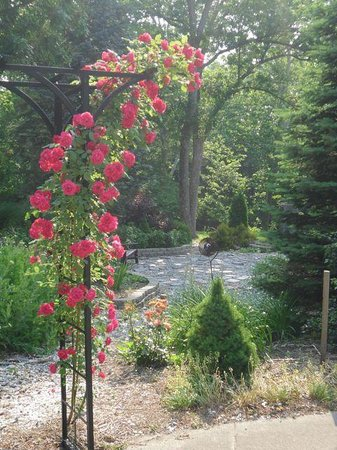 River Gardens Bed and Breakfast, LLC: Welcome Roses