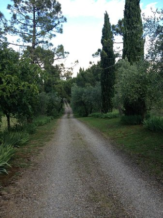 Florence House Rental - Villa I Cipressi & Villa Calcinaia: Path from villa to entrance of property