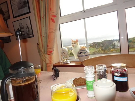O'Reilly's Guest Accommodation: Family (outdoor) cat looking in making sure breakfast table is being set up