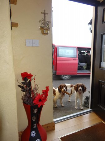 O'Reilly's Guest Accommodation: 2 friendly pooches checking to be sure we are happy.