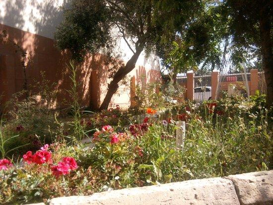 Boho Hostel : The lovely garden!