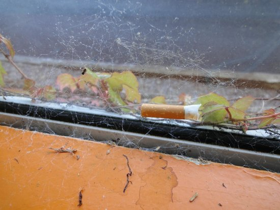 Paddy's Palace : Window in a dorm room. This cigarette butt is woven in a spider web.