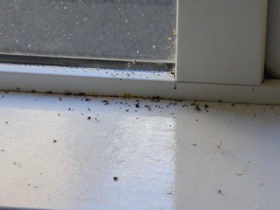 Paddy's Palace : The kitchen's fly graveyard.